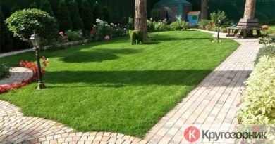 kak sdelat gazon na dache 390x205 - Как сделать газон на даче?