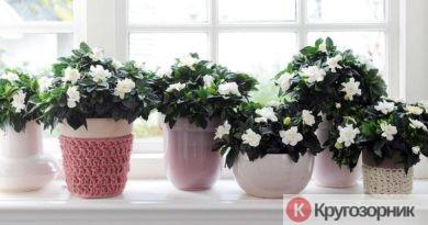 vybiraem komnatnye rasteniya 390x205 - Выбираем комнатные растения. Как выбрать цветы в квартиру?