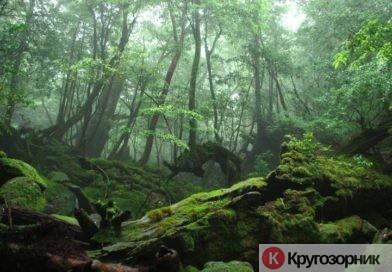 Как выжить в лесу обычному человеку? Инструкция для заблудившегося