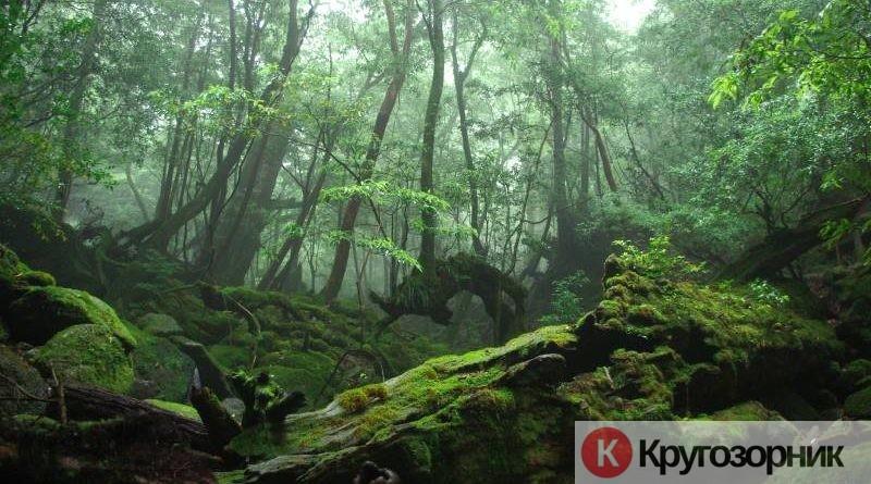 kak vyzhit v lesu obychnomucheloveku instrukciya dlya zabludivshegosya 800x445 - Как выжить в лесу обычному человеку? Инструкция для заблудившегося