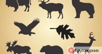 kakix zhivotnyx stoit opasatsya v lesu kaban medved los volk 390x205 - Каких животных стоит опасаться в лесу? Кабан, медведь, лось, волк