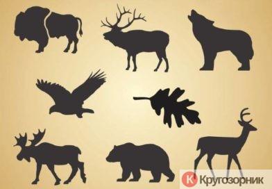 Каких животных стоит опасаться в лесу? Кабан, медведь, лось, волк