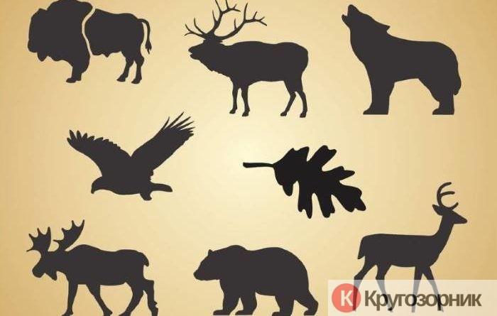 kakix zhivotnyx stoit opasatsya v lesu kaban medved los volk 700x445 - Каких животных стоит опасаться в лесу? Кабан, медведь, лось, волк