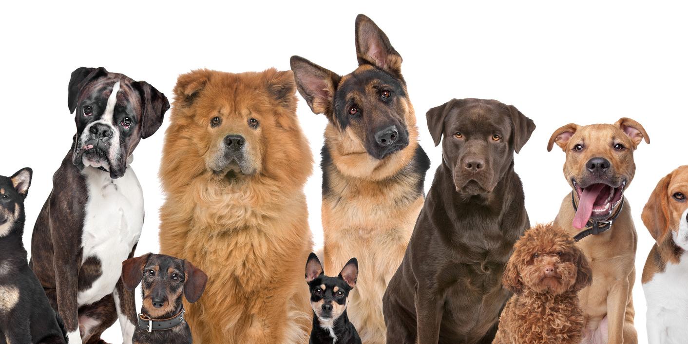 kak vybrat sobaku - Какую породу собак выбрать для ребенка. Лучшие породы для детей
