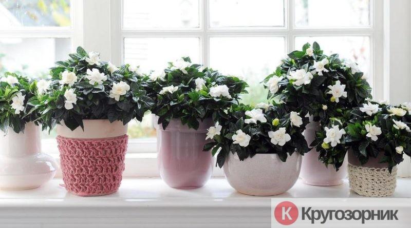 vybiraem komnatnye rasteniya 800x445 - Выбираем комнатные растения. Как выбрать цветы в квартиру?