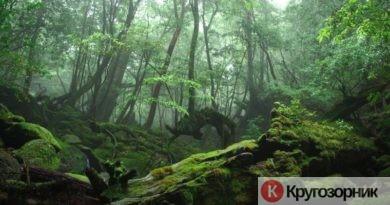 kak vyzhit v lesu obychnomucheloveku instrukciya dlya zabludivshegosya 390x205 - Как выжить в лесу обычному человеку? Инструкция для заблудившегося
