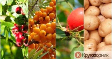 poleznye rasteniya v ogorode 390x205 - Полезные растения в огороде