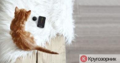 kak uxazhivat za kotenkom 390x205 - Как ухаживать за котенком?
