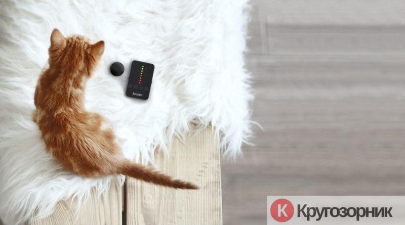 kak uxazhivat za kotenkom - Как ухаживать за котенком?